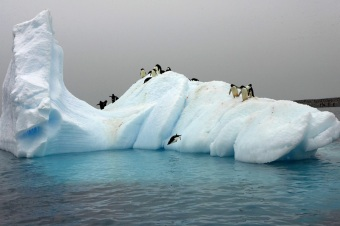 penguins_on_berg