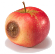 one-bad-apple-makes-the-barrel-bad-300x295